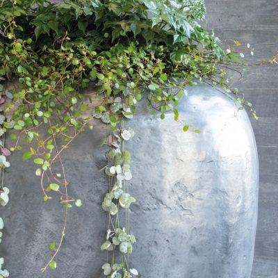 интериорно озеленяване Nature inPlant