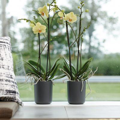 Колекция Орхидеи