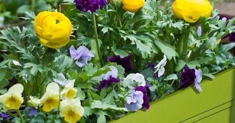 Идеи за пролетни сандъчета от navun.bg