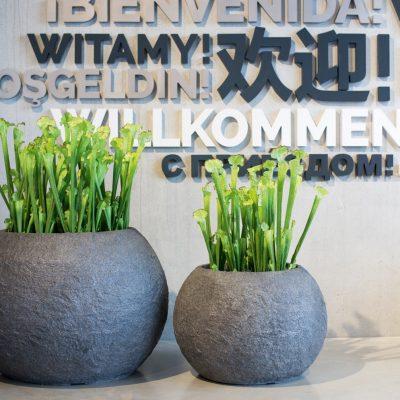 Дизайнерска купа / саксия rocky с автентичен каменен вид