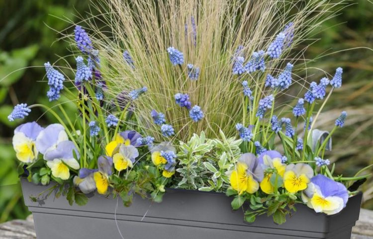 Идеи за пролетни сандъчета