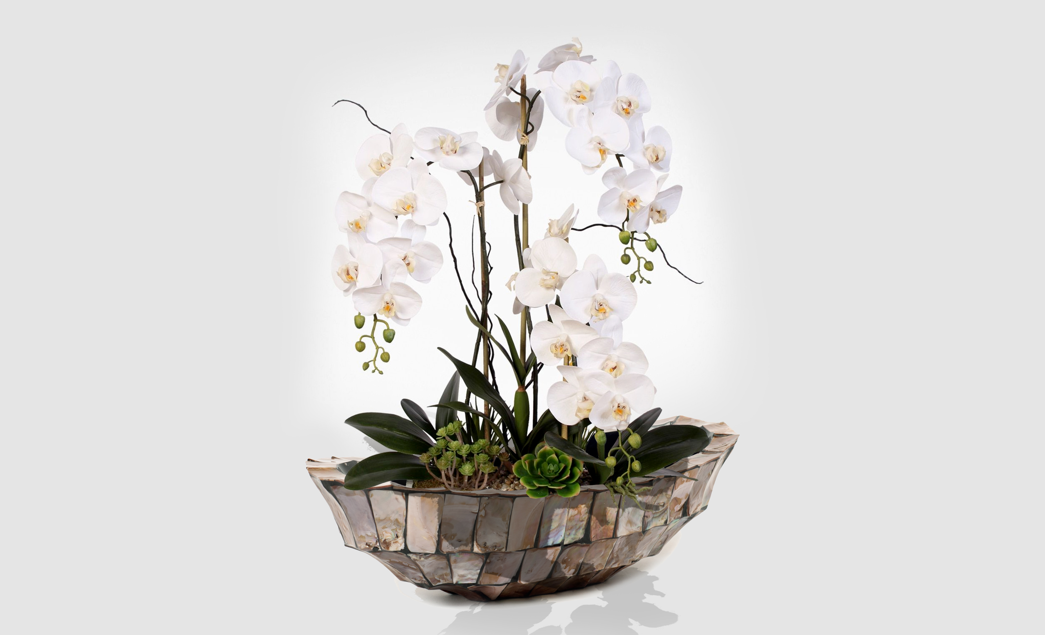 Как да отгледаме красиви орхидеи