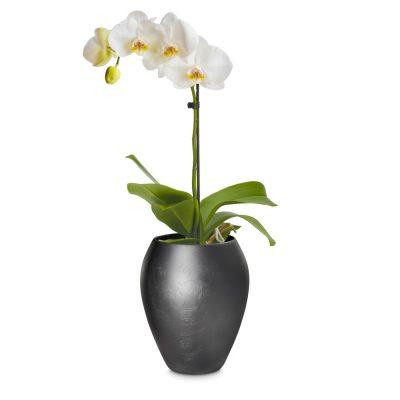 Дизайнерска саксия за орхидеи от navun.bg